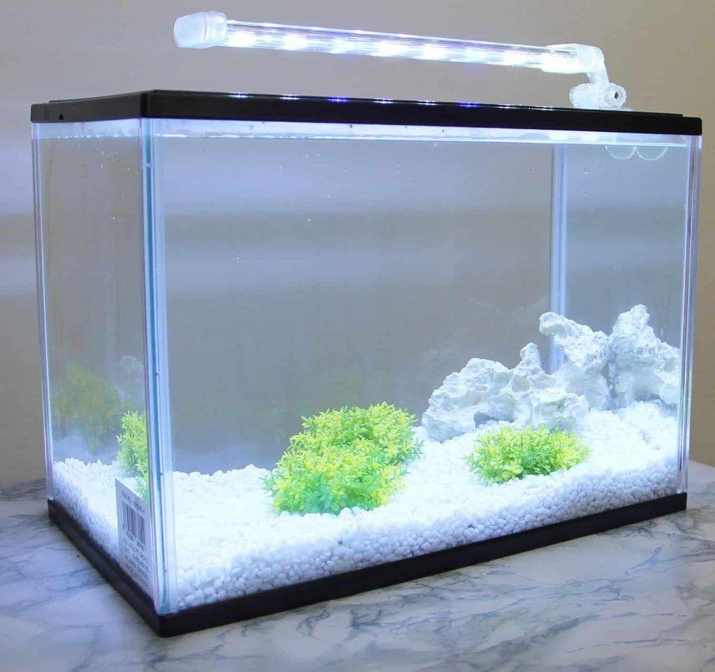 iluminación acuario ajolote