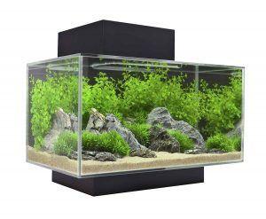 acuario para ajolote