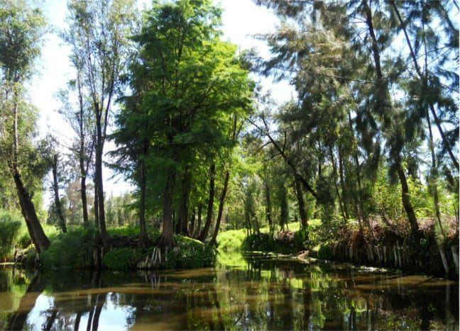 habitat natural del ajolote